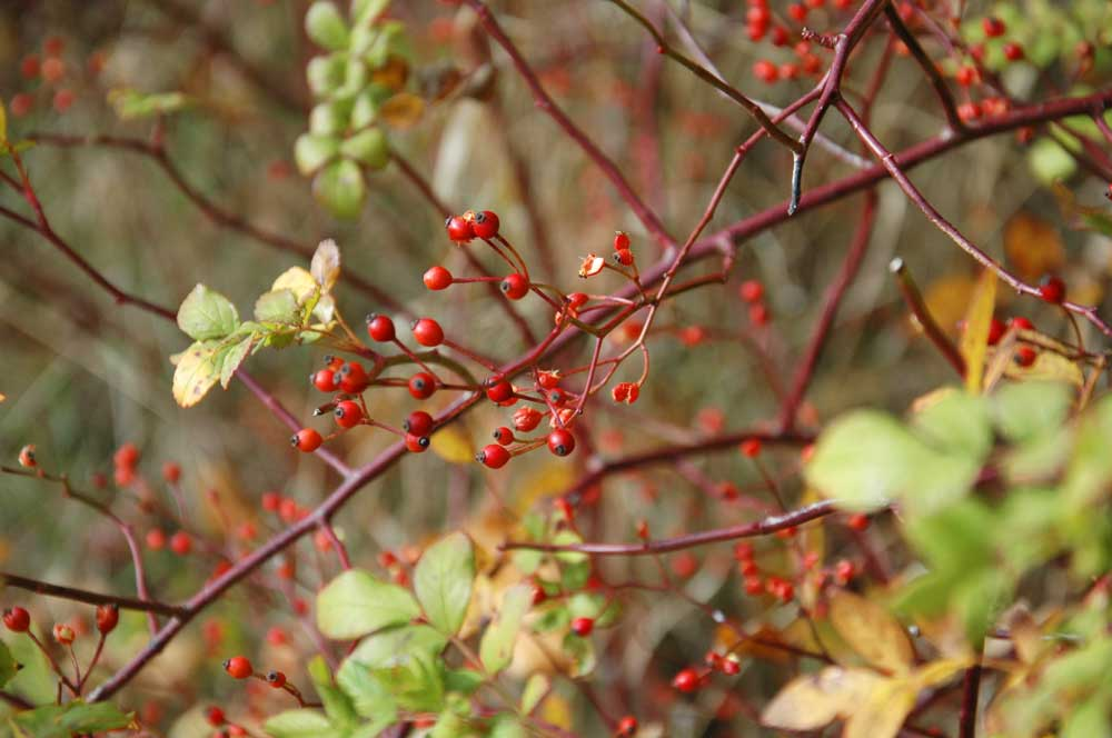 Herbst Detail